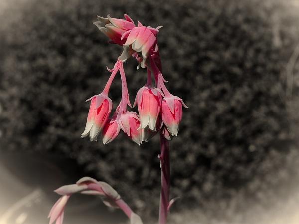 LITTLE FLOWERS. by kojack