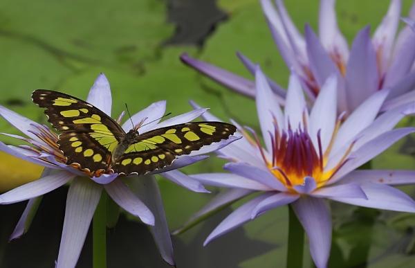 Malachite & Lily by Steveo28