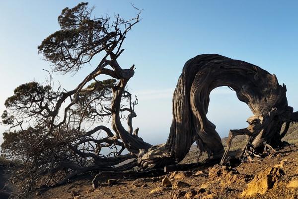 The climbing tree by MAK54