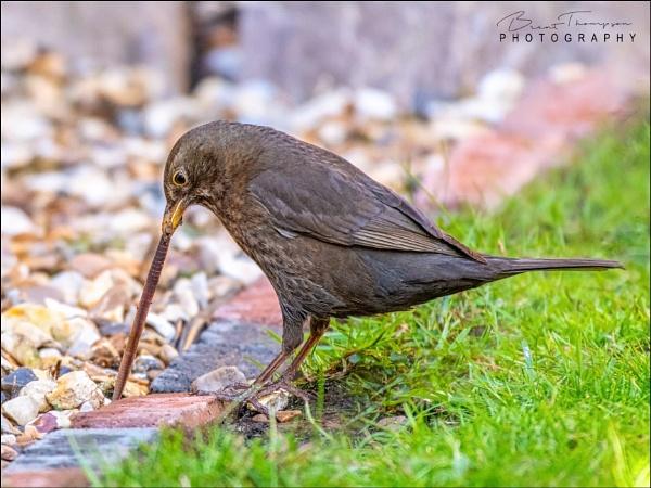 The Early Bird by johnnyjohhny