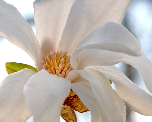 Merrill :  a magnolia by taggart
