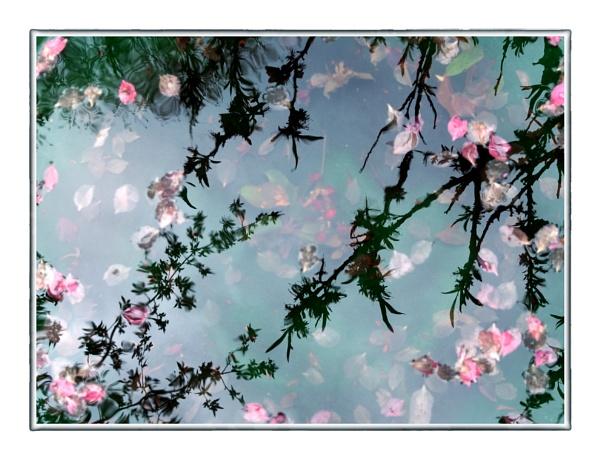 Reflections in a Birdbath by taggart