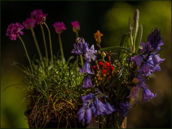 early evening glow... by estonian