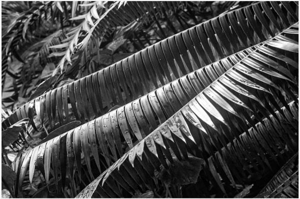 Tropical Palms by NevJB