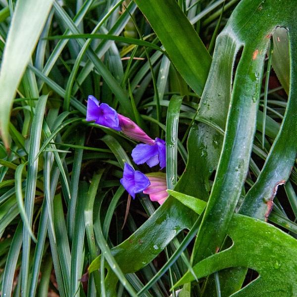 Shy Purple Flower by NevJB