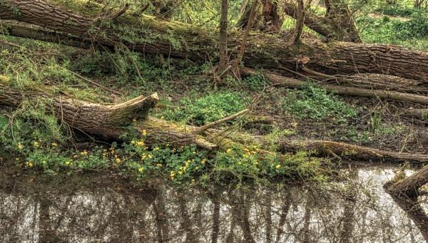 Fallen trees by BillRookery