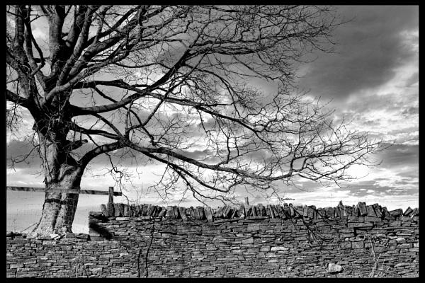 Yorkshire Oak by BiffoClick
