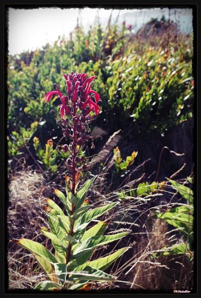 Light My Flower by PentaxBro