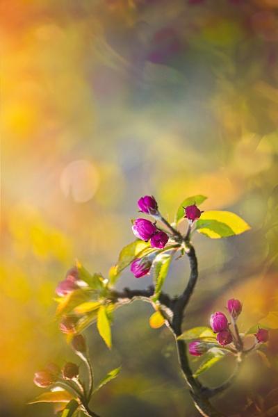 ...blossom by KristinaZvinakeviciute