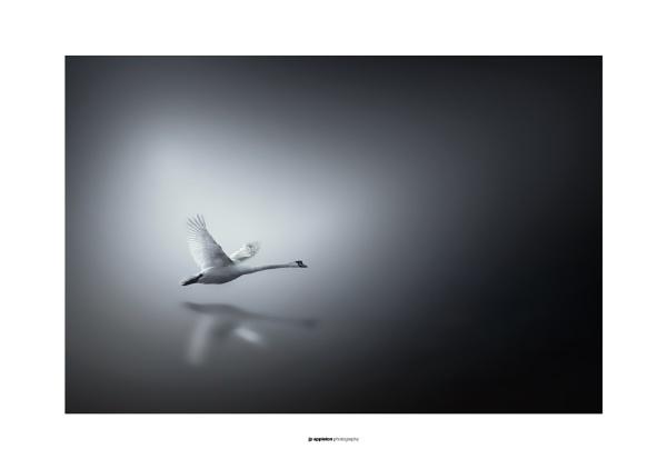 In Flight by jpappleton