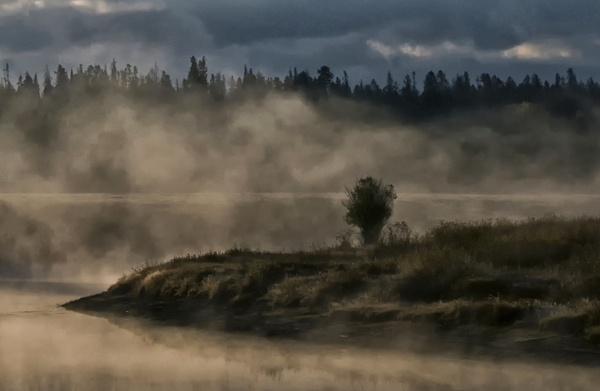 Misty Morning by dven