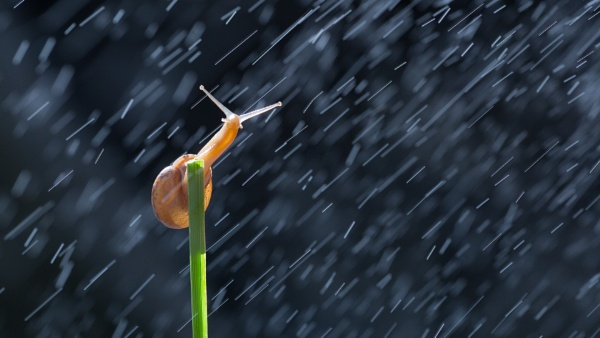 Rain Snail by sharifputra