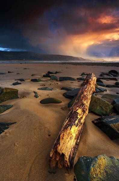 Water Log by chris-p