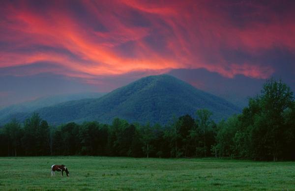 Greener Pastures by jrsundown