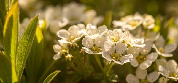 Blossom by mark2uk