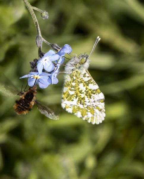 Flutterby by michaelo