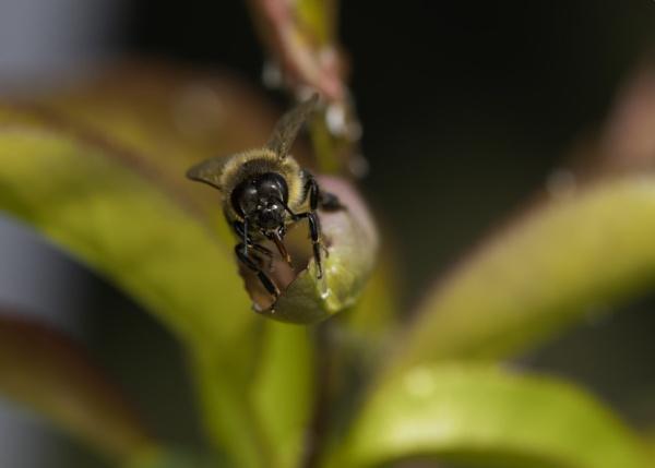 Bee by stevegilman