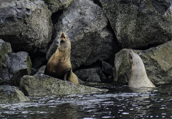 Sea Lion Friends by Daisymaye
