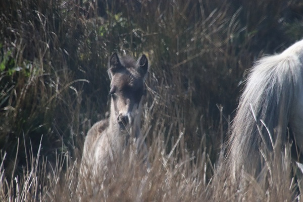 Beacons foal by mountains