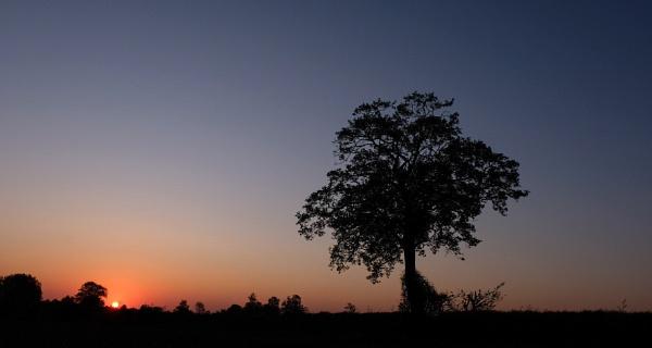 Sunrise by bluetitblue