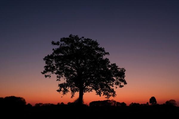Sunset by bluetitblue