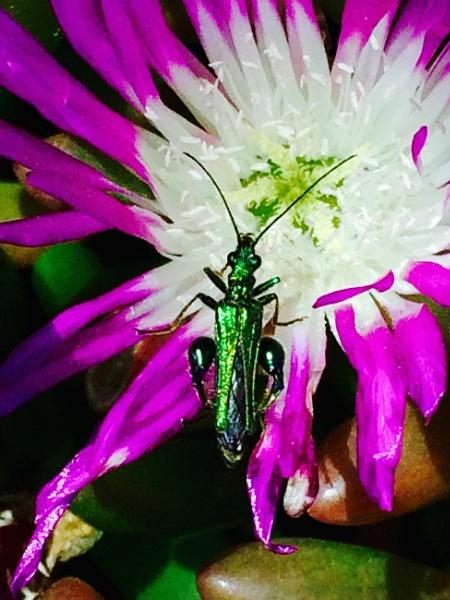 Emerald Bug by hippysnapper