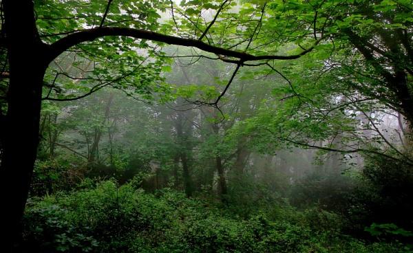 Misty morning by Vince52