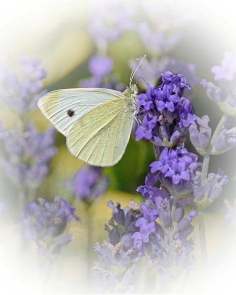 Dreamy White by sweetpea62