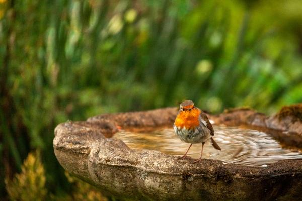 Lockdown Birds by DalesLass