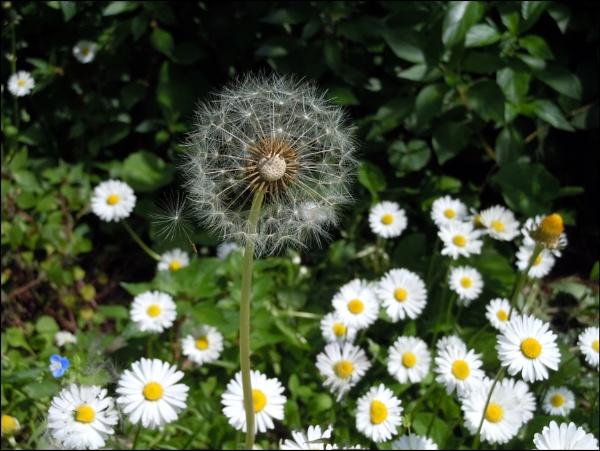 garden stuff by laura1