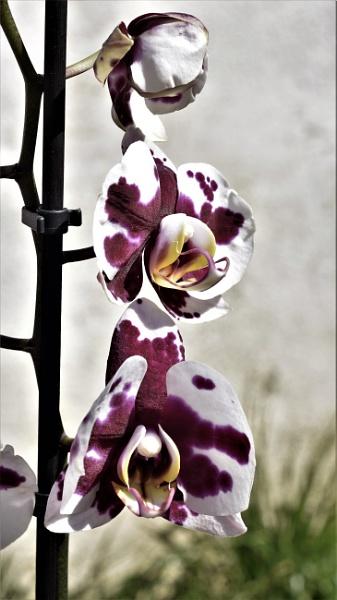 Three flowers by Madoldie