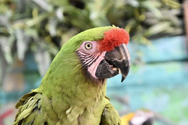 Longleat Parrot by lost_in_colour