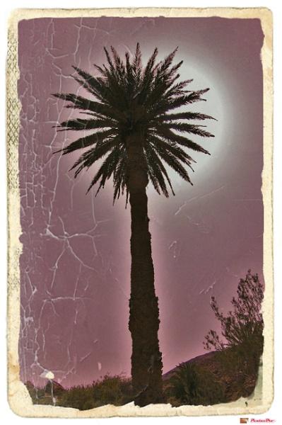 Sunlit Palm Tree by PentaxBro