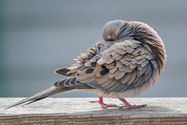 Such A Shy Bird by HoiPolloi