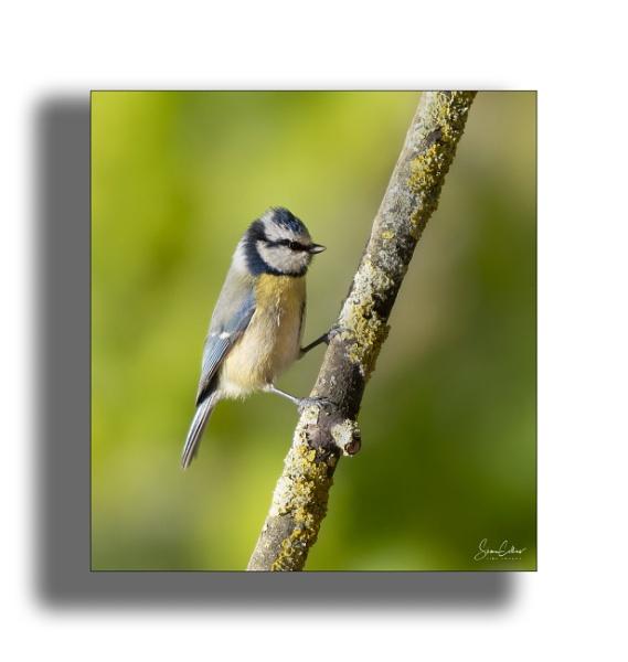 Garden Birds by sidcollins