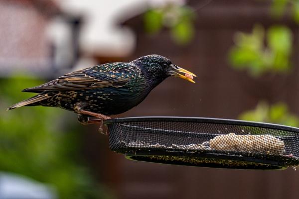 Back Garden Birdwatching #1 by terra