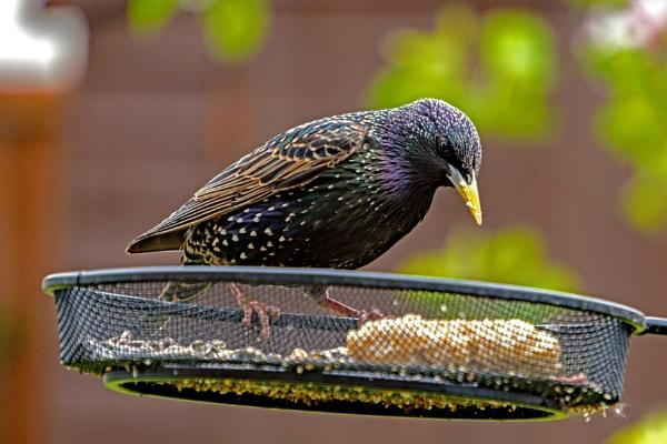 Back Garden Birdwatching #3 by terra