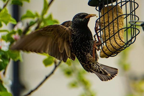 Back garden birdwatching #4 by terra