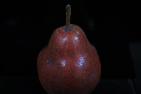 dark red fruit by HoneyT