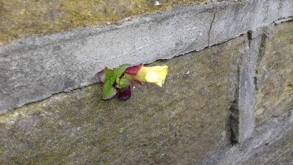 Wall Flower by YoungGrandad