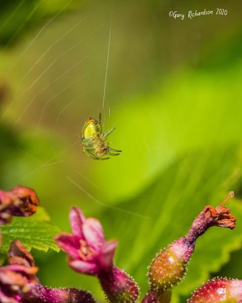 cucumber spider by djgaryrichardson