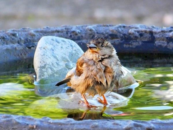 BATH TIME by ianmoorcroft