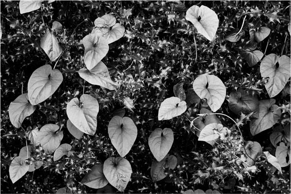 Leaves by dark_lord