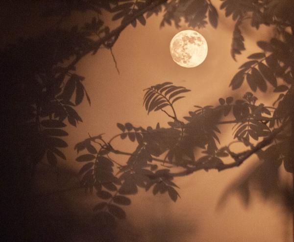 Last Night\'s Moon by kaybee