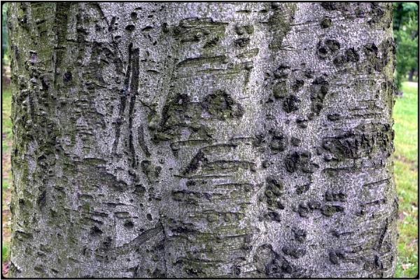the hieroglyphical tree by FabioKeiner