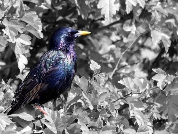 Colourful bird in black and white world. by DerekHollis