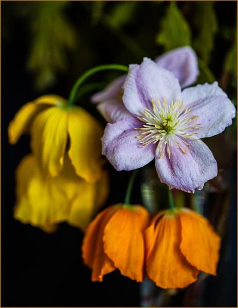 orange and lemon droop... by estonian