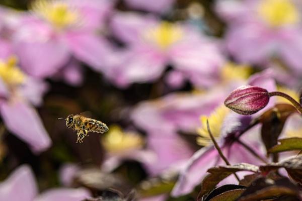 Bee by davereet
