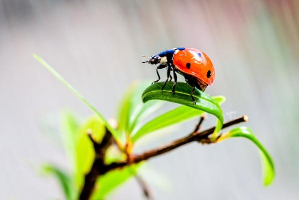 ladybug by mogobiker