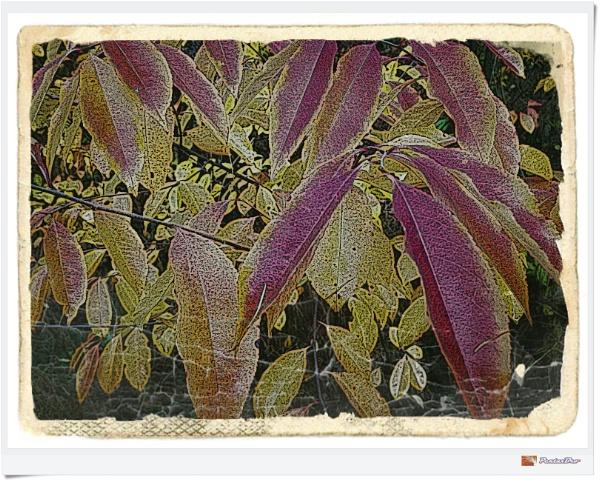 Autumnal Equinox by PentaxBro